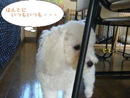 2008_09200018.jpg