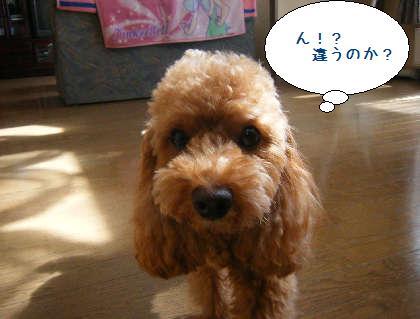 2008_09200025.jpg