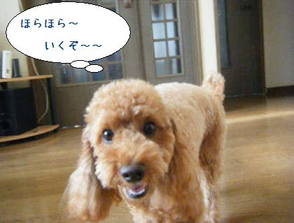 2008_09200028.jpg