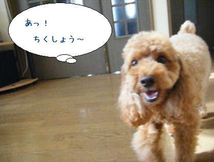 2008_09200041.jpg