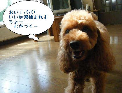2008_09200042.jpg