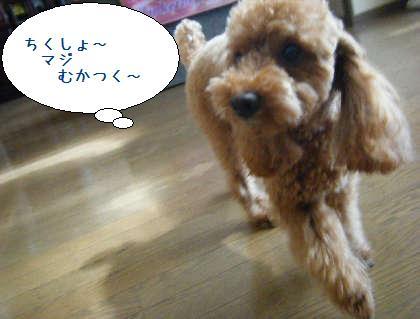 2008_09200043.jpg