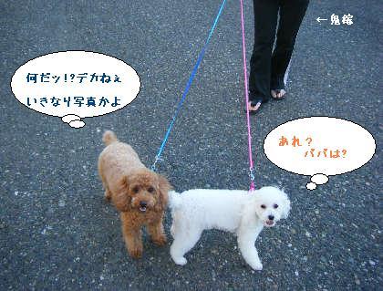 2008_09200046.jpg