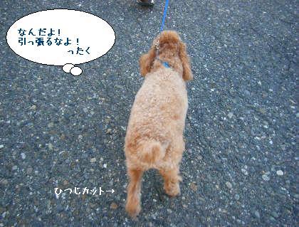 2008_09200047.jpg