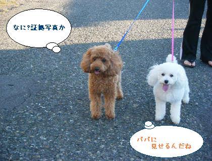 2008_09200051.jpg