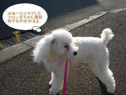 2008_09200098.jpg