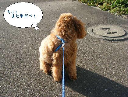 2008_09200109.jpg
