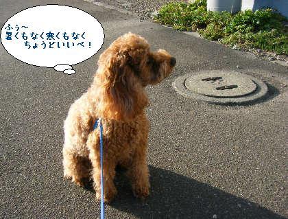 2008_09200110.jpg