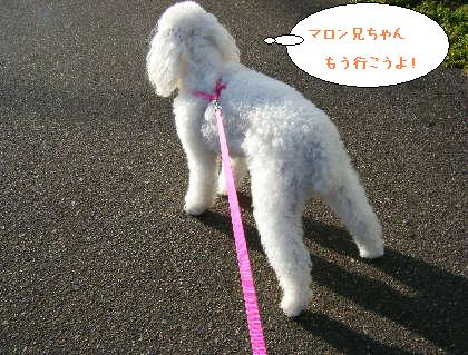 2008_09200111.jpg