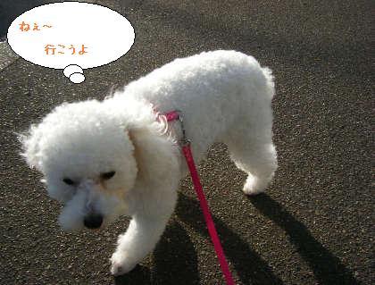 2008_09200112.jpg