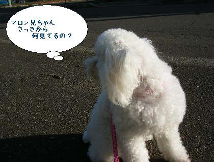 2008_09200115.jpg