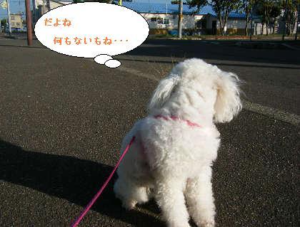 2008_09200117.jpg