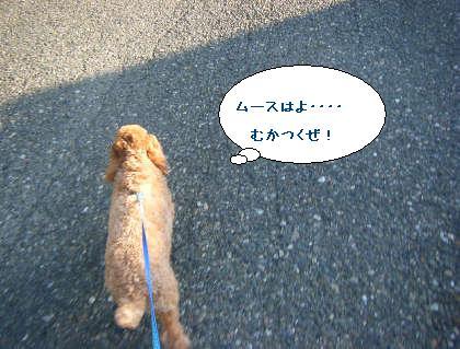 2008_09200138.jpg