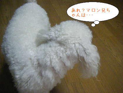2008_09210002.jpg