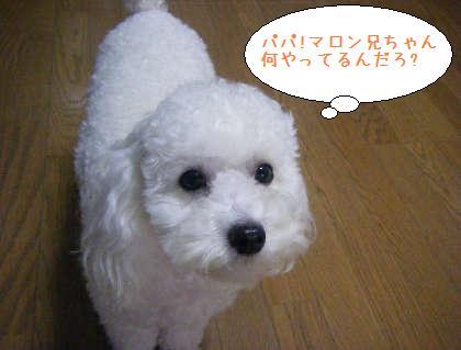 2008_09210003.jpg