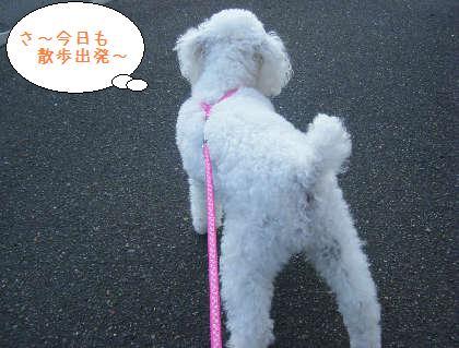 2008_09210010.jpg