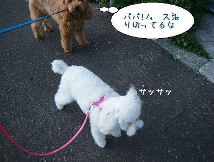 2008_09210012.jpg