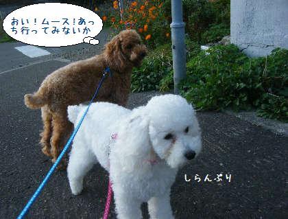 2008_09210014.jpg