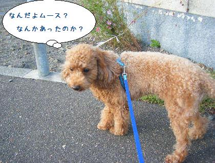 2008_09210017.jpg