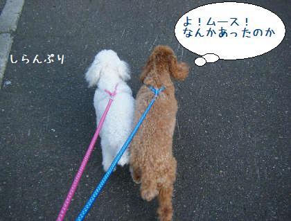 2008_09210020.jpg