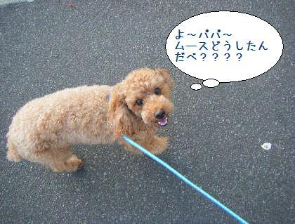 2008_09210026.jpg