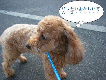 2008_09210027.jpg