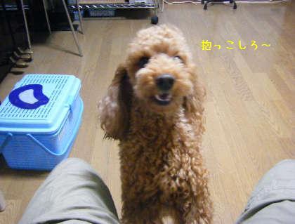 2008_09250004.jpg