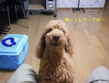 2008_09250005.jpg