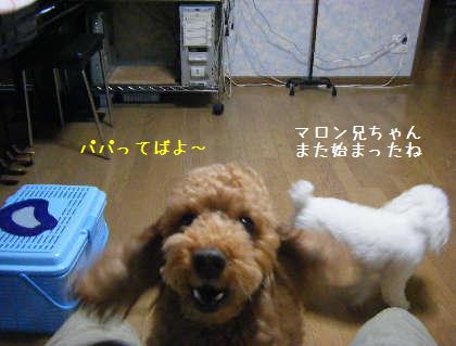 2008_09250007.jpg