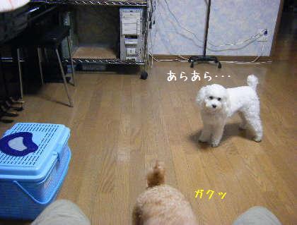 2008_09250010.jpg