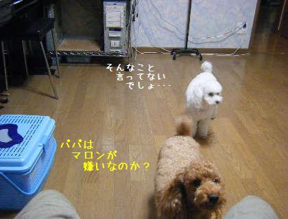 2008_09250011.jpg