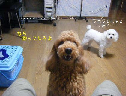 2008_09250012.jpg