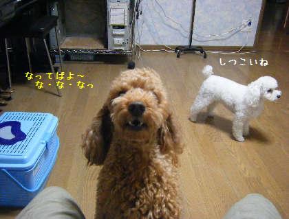2008_09250014.jpg