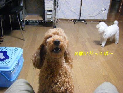 2008_09250016.jpg