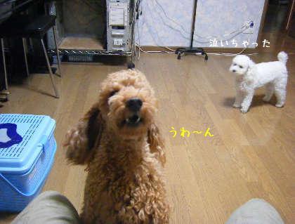 2008_09250017.jpg