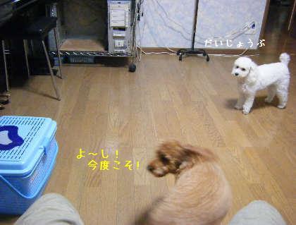 2008_09250018.jpg