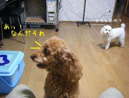 2008_09250019.jpg