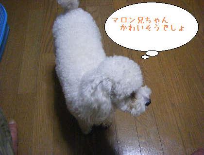 2008_09250040.jpg