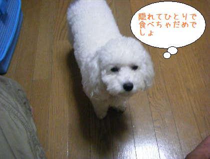 2008_09250041.jpg