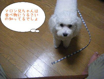 2008_09250043.jpg