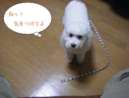 2008_09250046.jpg