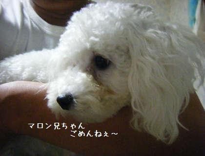 2008_09250050.jpg