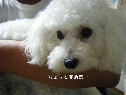 2008_09250051.jpg