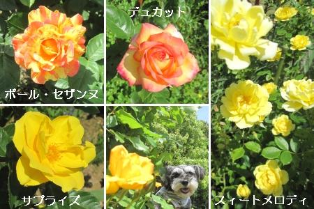 20100518m08.jpg