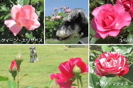 20100518m09.jpg