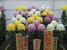三本立花壇の部日本一