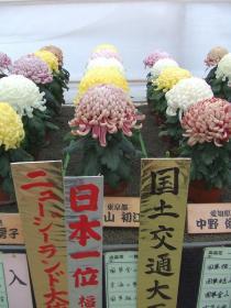 福助花壇の部日本一