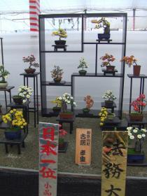 小品盆栽花壇日本一