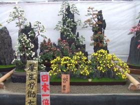 盆栽花壇の部日本一