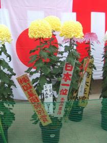 三本立単鉢の部日本一